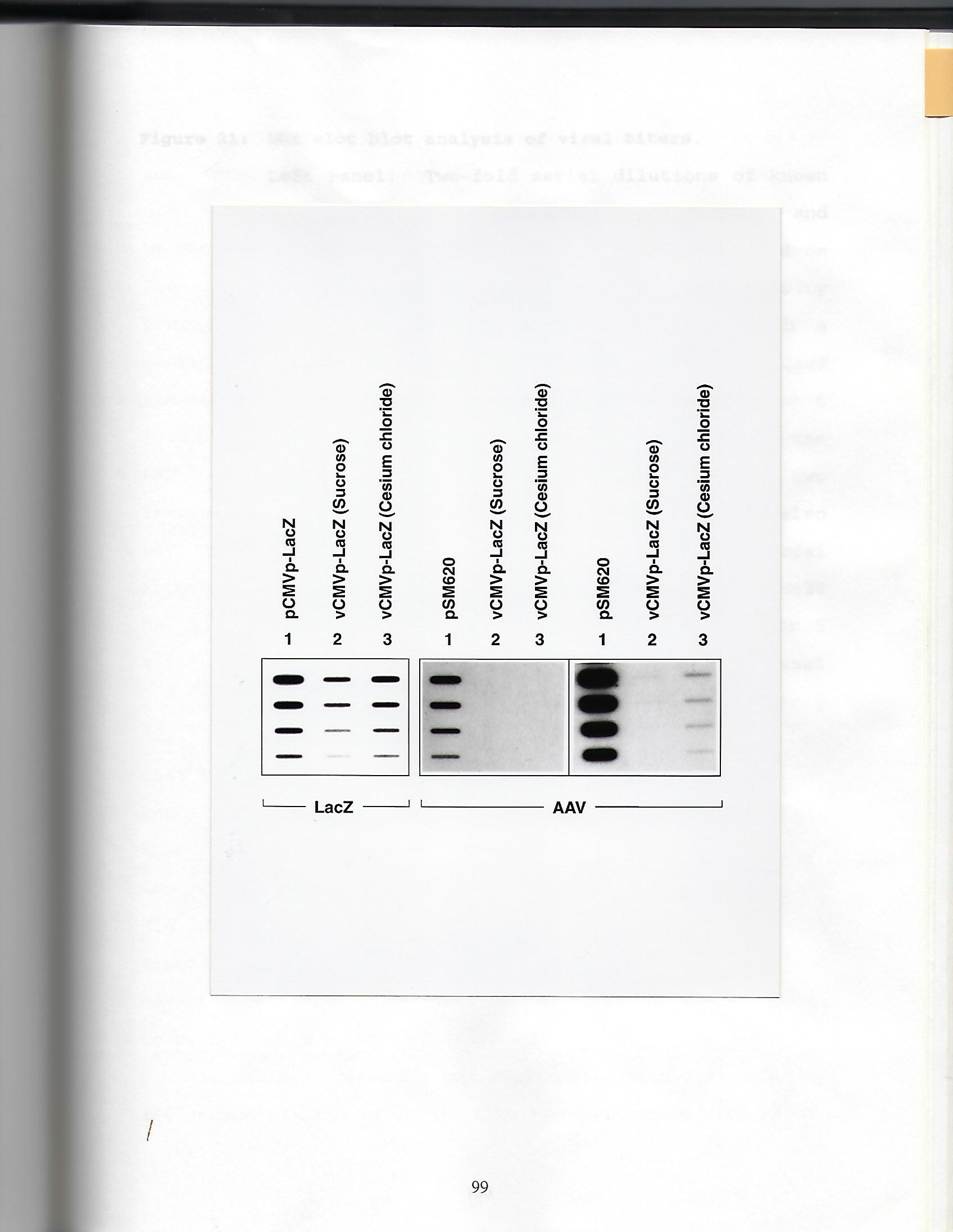 thesis fig 21.jpg